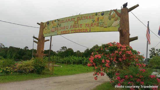 desaru fruit farm tripadvisor